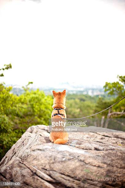 Dog and view