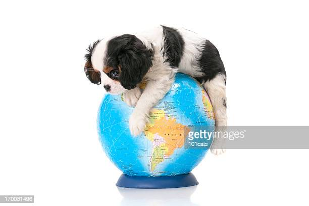 dog and world