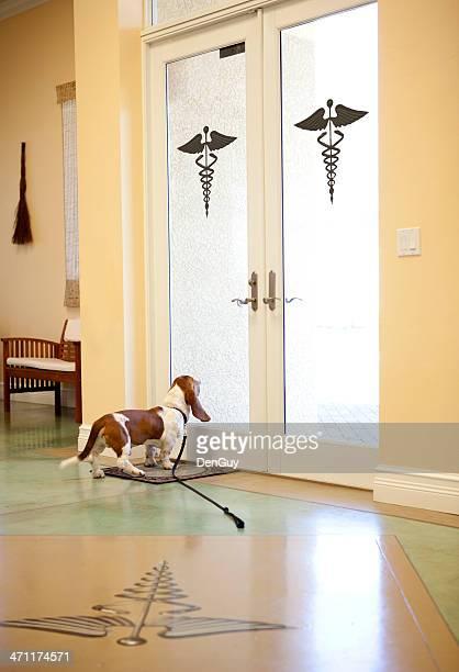 Dog at Animal Hospital Ready to Go Home