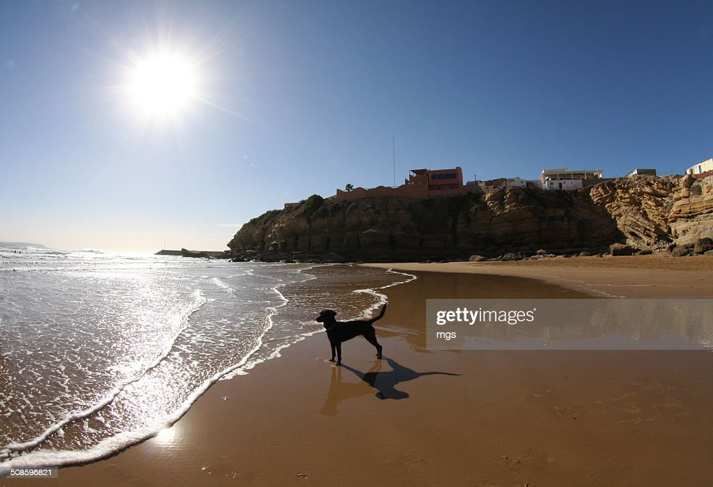 Dog at beach : Stock-Foto