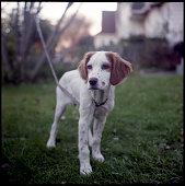Dog at Black Rock, CT, USA