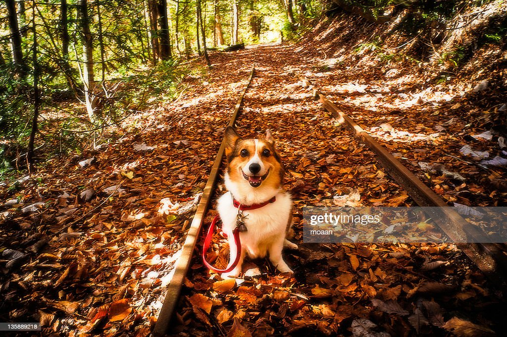 Dog at discontinued line : Stock Photo