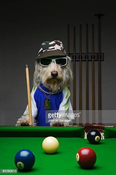 Dog at pool table