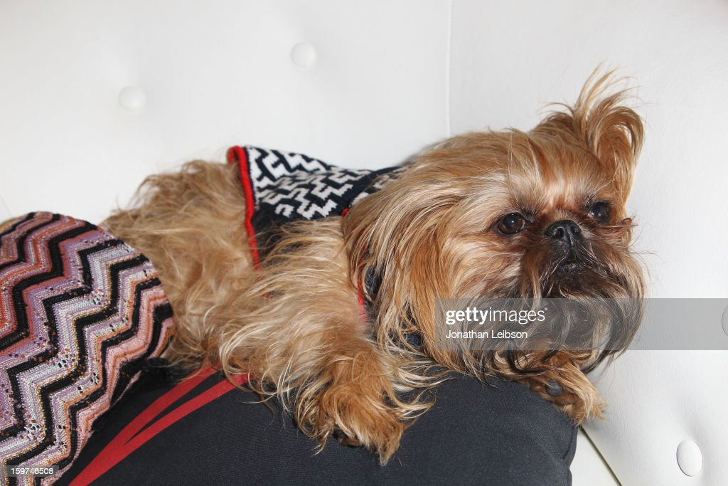 A dog attends Day 1 of the Variety Studio at 2013 Sundance Film Festival on January 19, 2013 in Park City, Utah.