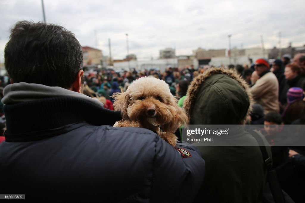 A dog attends the re-opening ceremonies at Fairway Market on the waterfront in Red Hook on March 1, 2013 in the Brooklyn borough of New York City. Fairway, which quickly became a popular shopping destination and an anchor in the struggling community of Red Hook, was closed following severe flooding during Hurricane Sandy on October 29, 2012. Like the rest of Red Hook, Fairway has struggled to quickly re-open in a neighborhood that lost dozens of businesses during the storm. The re-opening, which included a ceremony and ribbon cutting featuring Miss America and Mayor Michael Bloomberg, is being trumpeted as the Red Hook neighborhood's official comeback since the storm.