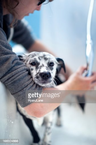 Dog Bath Time Stock Photo Getty Images