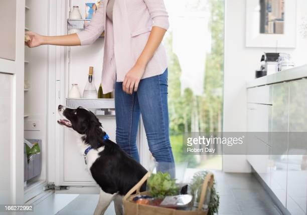 Dog begging for food at open fridge