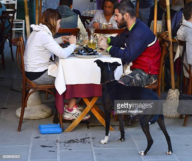 A dog begs for a handout as tourists and residents of Vernazza Italy enjoy their lunches at an outdoor cafe in the small village in northwestern...