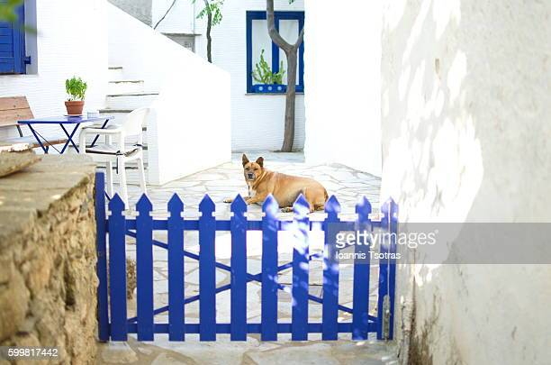 Dog behind wooden fence door