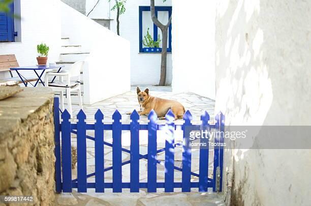 Dog behind wooden fence door