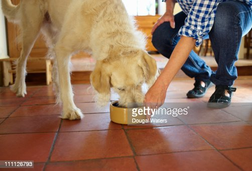 Dog being fed by owner.