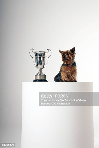 Dog beside a large silver trophy