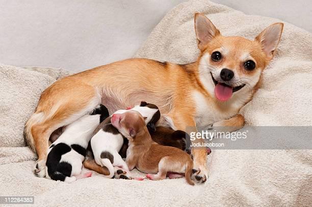 Dog birth