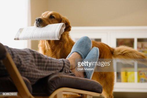Dog bringing newspaper to owner