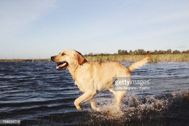 Dog By Lake Against Sky