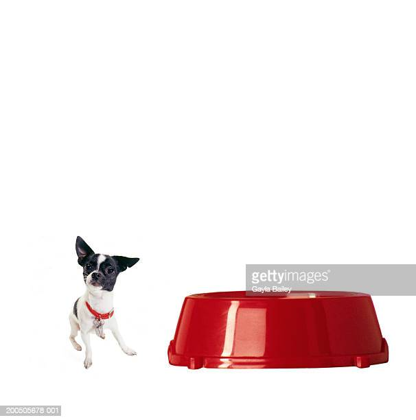 Dog by red food bowl (digital composite)