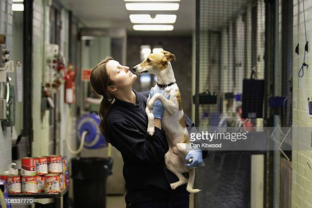 A dog called Baxter is held by Susie Perry at Heathrow Airport's Animal Reception Centre on January 25 2011 in London England Many animals pass...