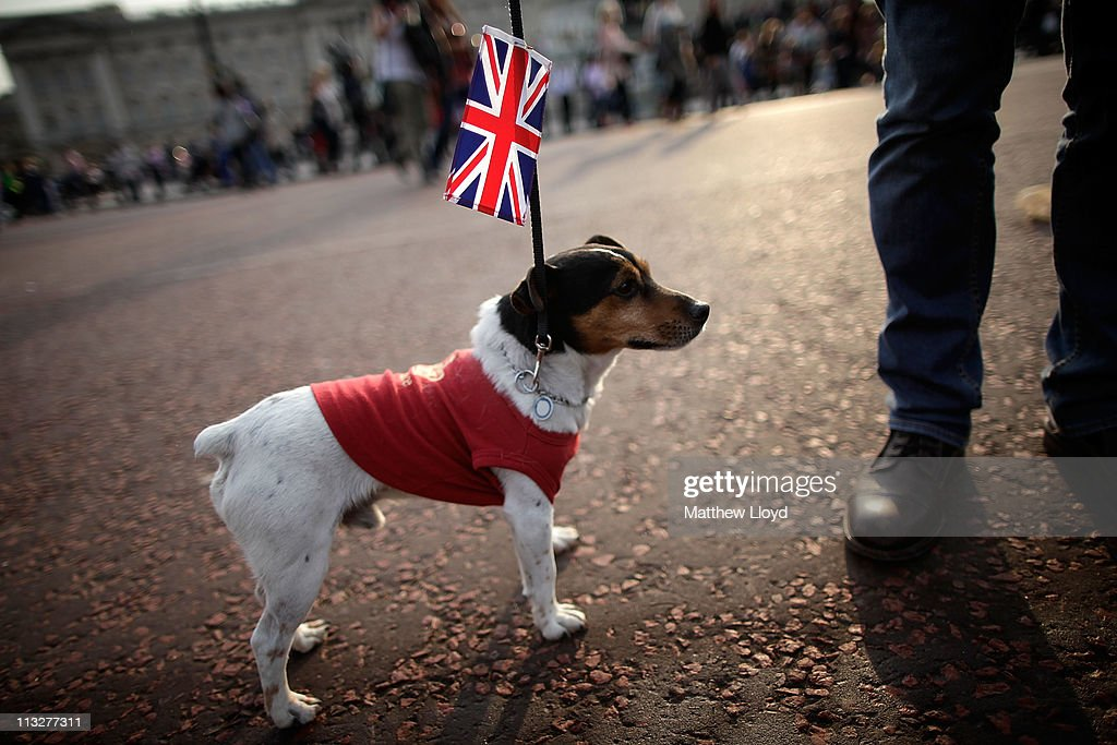 A dog called Harry poses for a photograph outside Buckingham Palace on April 29, 2011 in London. The marriage of Prince William, the second in line to the British throne, to Catherine Middleton is being held in London today. The Archbishop of Canterbury conducted the service which was attended by 1900 guests, including foreign Royal family members and heads of state. Thousands of well-wishers from around the world have also flocked to London to witness the spectacle and pageantry of the Royal Wedding and street parties are being held throughout the UK.