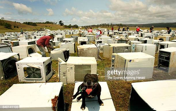 A dog called Poppy sits on a washing machine during construction of a washing machine sculpture in a paddock in Jellat Jellat near Bega on the south...