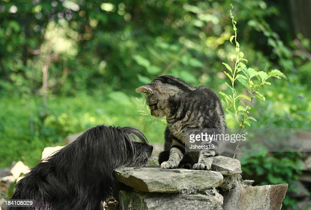 Chien chat &