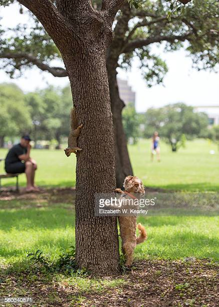 Dog chasing squirrel up a tree