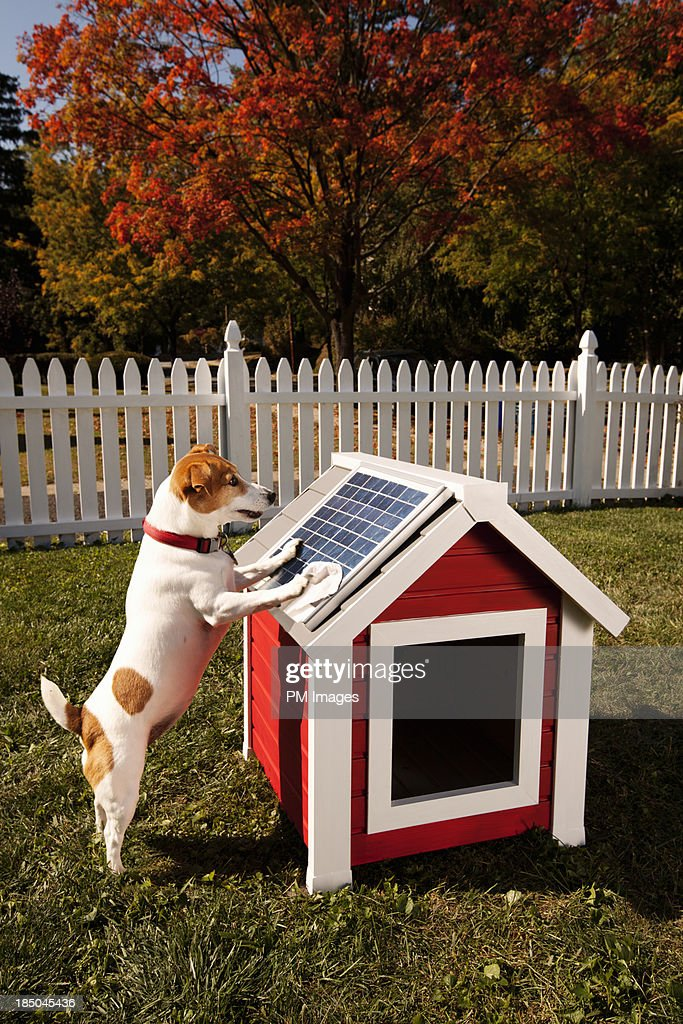 Dog cleaning solar panel on kennel : Stock Photo
