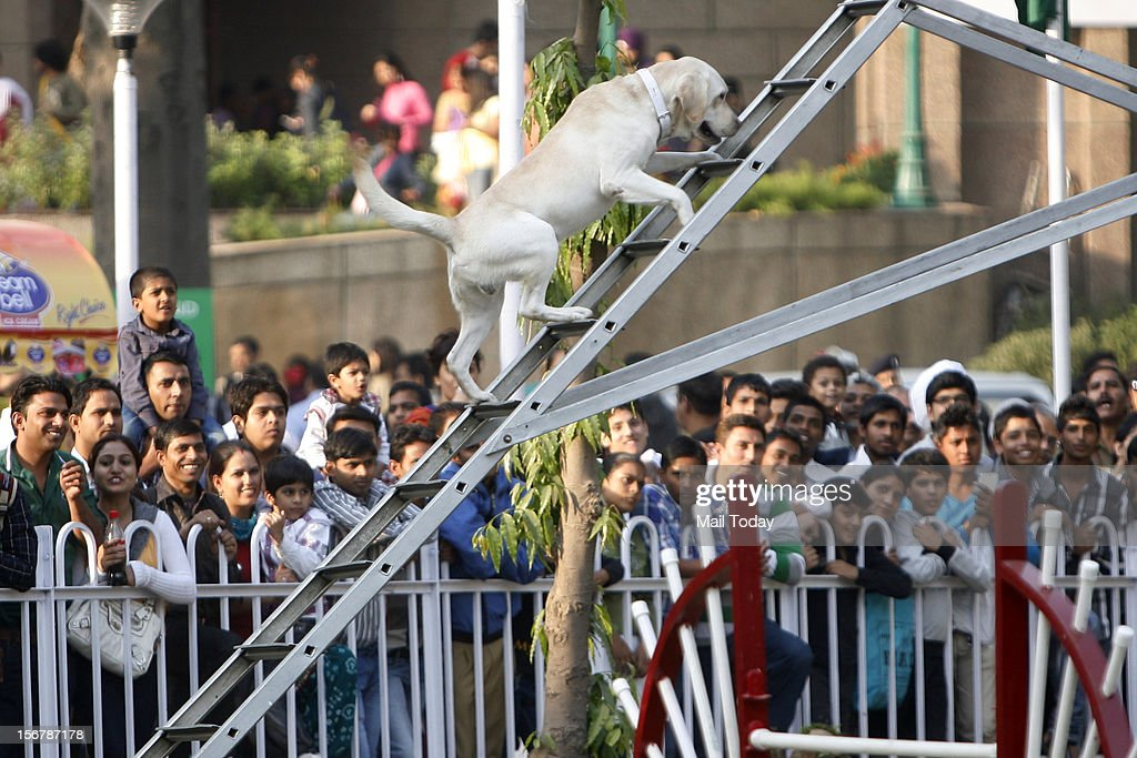 A dog climbing stairs outside othe venue of India International Trade Fair in New Delhi on Tuesday.