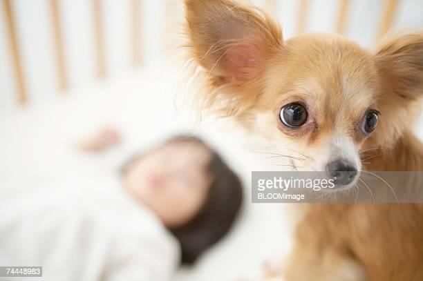 Dog ,close-up