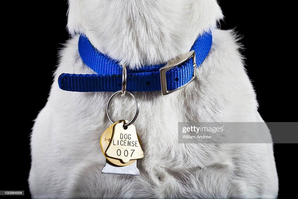 Dog collar with license : Stock Photo