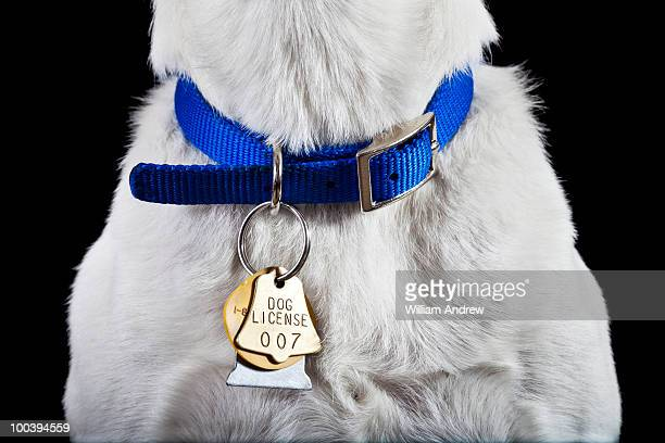 Dog collar with license