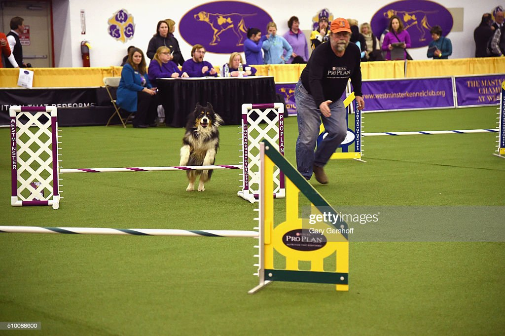 California Dog Show Handlers