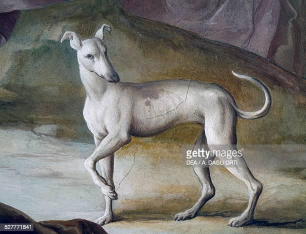 Dog detail from the fresco by Jacopo Guarana central hall of the Villa Contarini Valnogaredo Veneto Italy 18th century