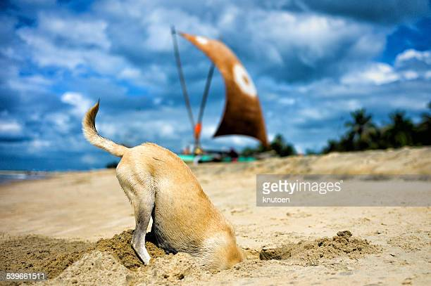 Dog digging for crabs