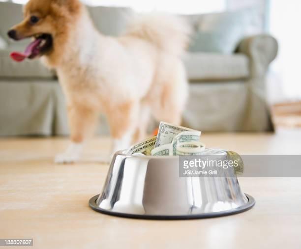 Dog dish full of money