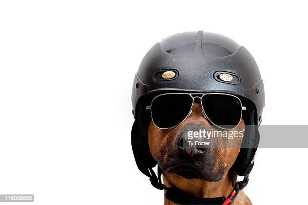 Dog dressed as police man
