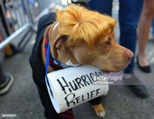 A dog dressed as President Donald Trump is seen during the 27th Annual Tompkins Square Halloween Dog Parade in Tompkins Square Park in New York on...