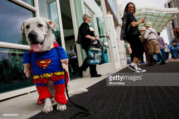 A dog dressed as Superman is seen during the ComicCon International convention in San Diego California US on Thursday July 9 2015 ComicCon...