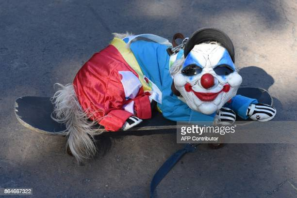 A dog dressed in costume is seen during the 27th Annual Tompkins Square Halloween Dog Parade in Tompkins Square Park in New York on October 21 2017 /...