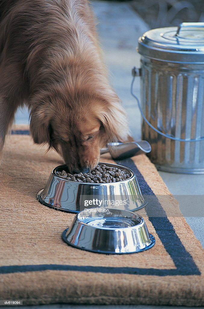 Dog Eating Food From Chrome Bowl : Stock Photo