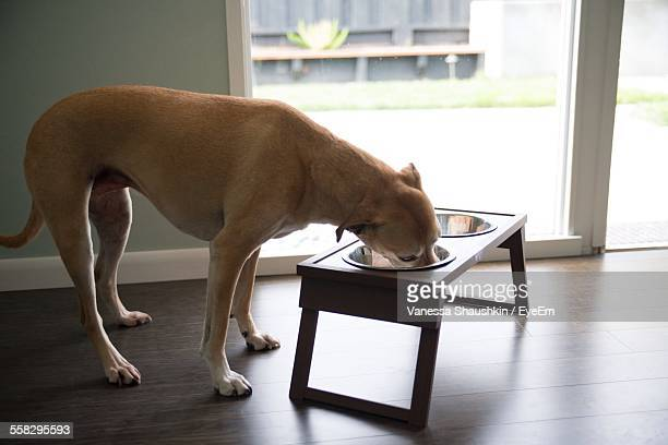 Dog Eating From His Bowl