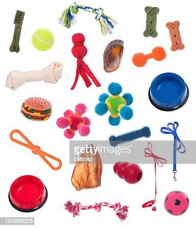 Dog Equipment : Stock Photo