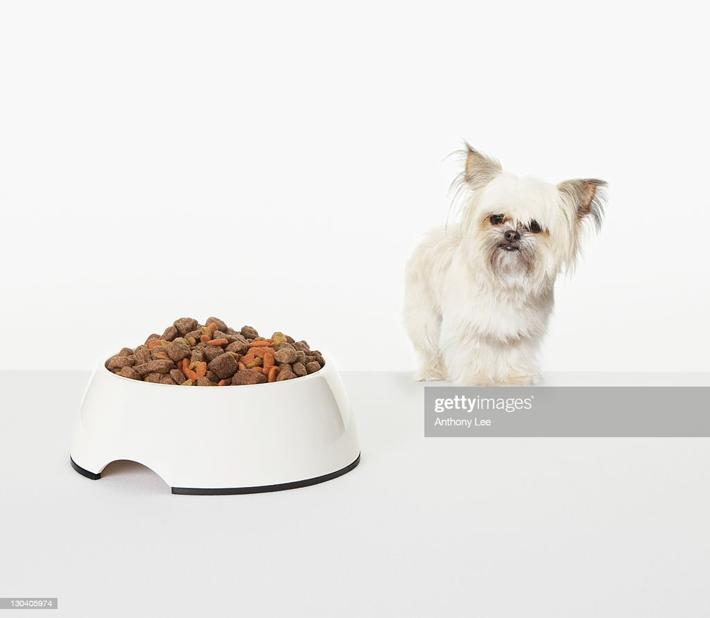 Dog examining bowl of dog food : Stock Photo