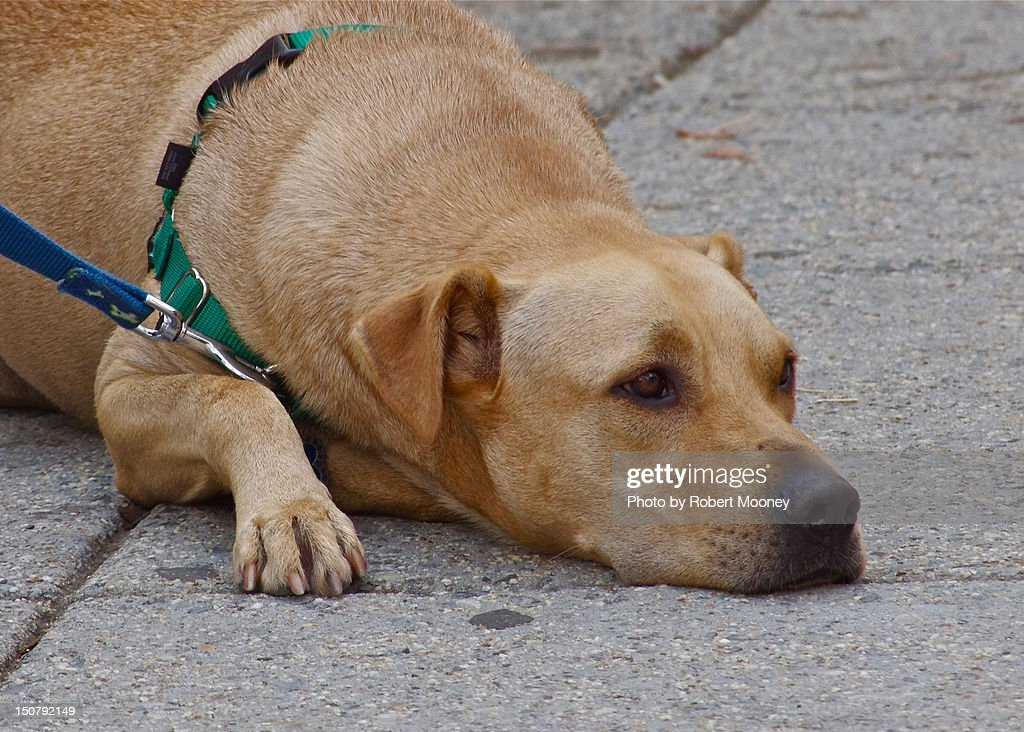 Dog face : Stock Photo