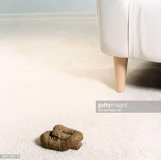 Dog Feces on Carpet