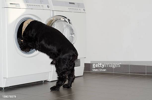 Dog finds something in washing machine
