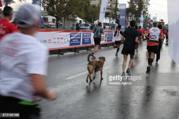 A dog follows the participants during Vodafone 39th Istanbul Marathon at The 15 July Martyrs Bridge in Istanbul Turkey on November 12 2017 It is the...