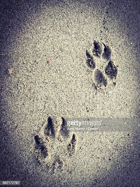 Dog Footprints In Sand