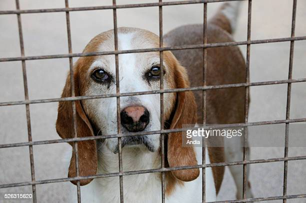 Dog for adoption confined in a cage in a refuge of the RSPCA / ASPCA