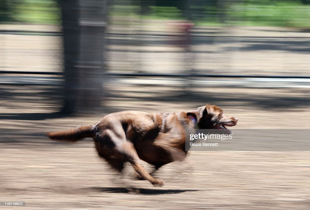 A dog frolics at the Town of Oyster Bay dog park on July 22, 2012 in Massapequa, New York.