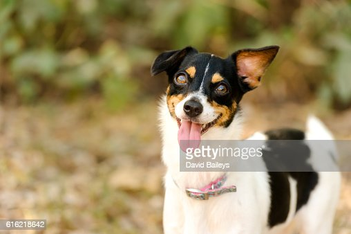Dog Funny : Stock Photo